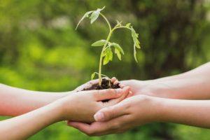 Empresas que adotam agenda ESG têm rentabilidade acima do Ibovespa